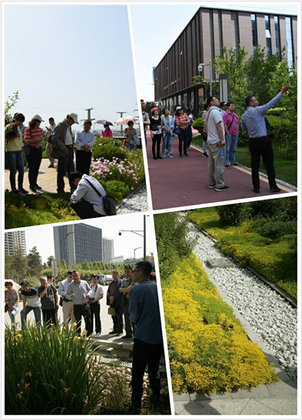 """有序组织""""的思路,在沣西新城海绵城市设计中实现了融汇景观,创新工艺"""